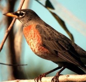 pakistanbird