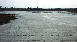 bhimariver