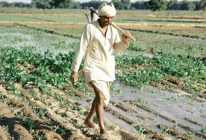 farmersindia